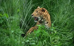 Wildlife tours of West Bengal