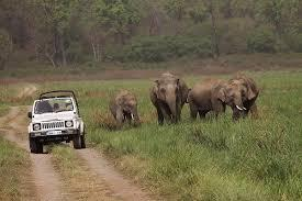 Corbett Jungle Safari Tour
