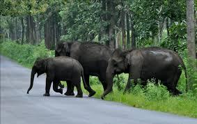 Wildlife Tour Of Kerala