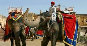 Best Of Rajasthan With Wildlife