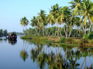 Cochin - Backwater